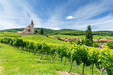 Old Church And Vineyards In Hu...