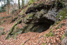 Bear Cave In Forest