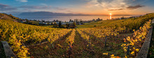 Panorama Of Vineyards In Switz...