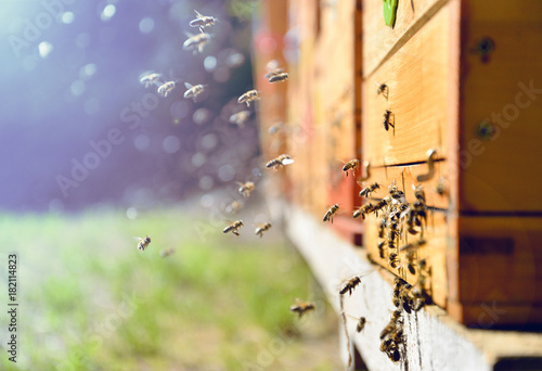 Spoed Foto op Canvas Bee Bees flying around beehive. Beekeeping concept.