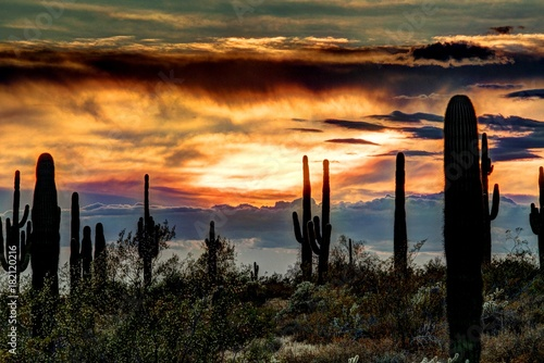 Staande foto Arizona Sonoran Sunset