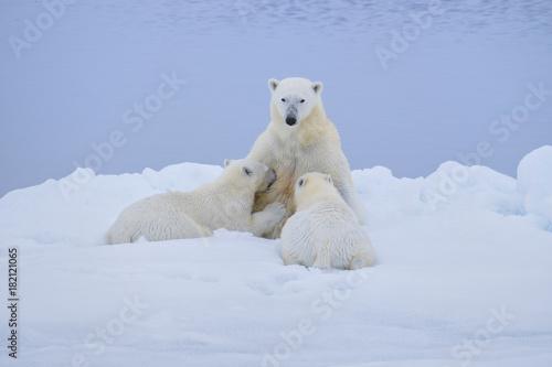 Staande foto Ijsbeer Polar Bear with Nursing Cubs on Ice Flows near Svalbard, Norway