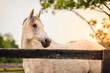 Leinwandbild Motiv Horse of a farm