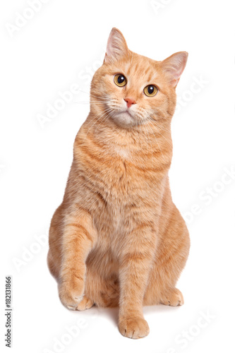 Cute red yellow pale cat sitting isolated on white background. Fototapeta