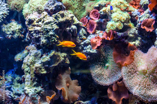 Foto op Canvas Onder water Fragment of colorful coral reef