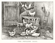 Poultry Yard Animals In An Anc...