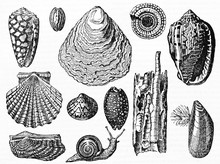Set Of Various Isolated Shell ...