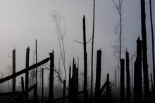 Broken Tree During Storm Gales...