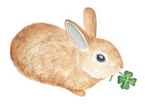 Little fluffy pet rabbit carring a green four leafed clover sprout. Symbol of good luck, sweet hello, tenderness, forest, welcome spring, summer. Hand drawn watercolour, isolated on white background. - 182176817