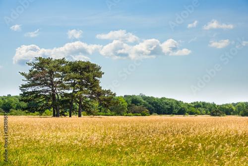 Fotobehang Honing Landscape, Dendrological Park of the National Reserve Askania-Nova, Ukraine