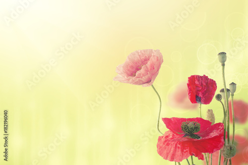 Foto op Canvas Bloemen Abstract natural summer or spring floral background with bunch of red and pink poppy flowers with copy space
