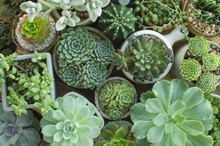 Various Of Houseplant Flowering Succulent Plant Pots Background Top View