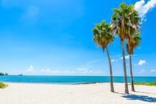 Sombrero Beach With Palm Trees...