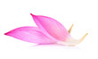 canvas print picture - Closeup on lotus petal on white background