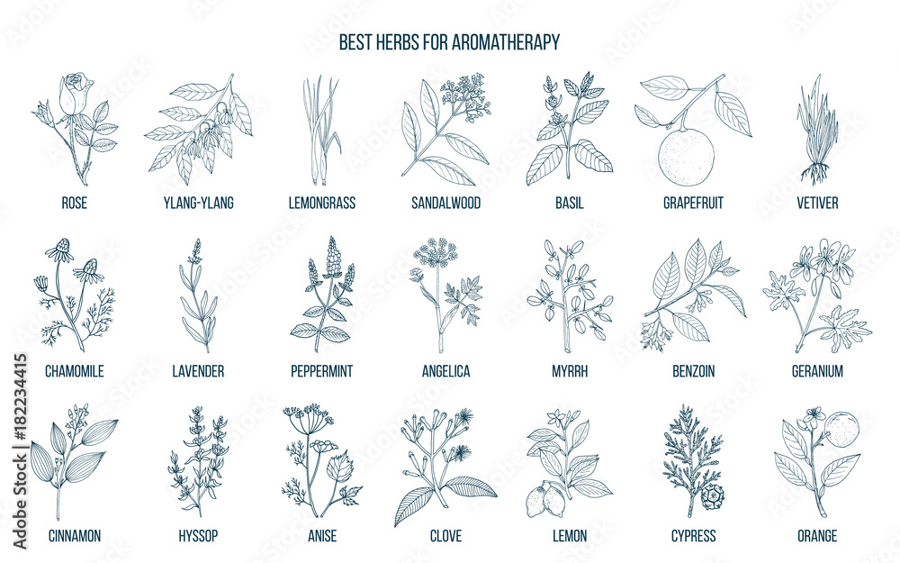 Fototapety, obrazy: Best herbs for aromatherapy