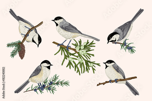 Photo Set of birds.