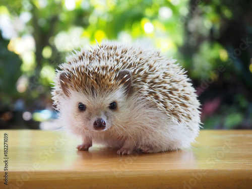 Photo  Cute hedgehog on a natural background.