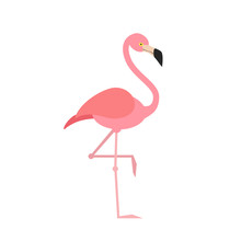 Pink Flamingo Isolated On Whit...
