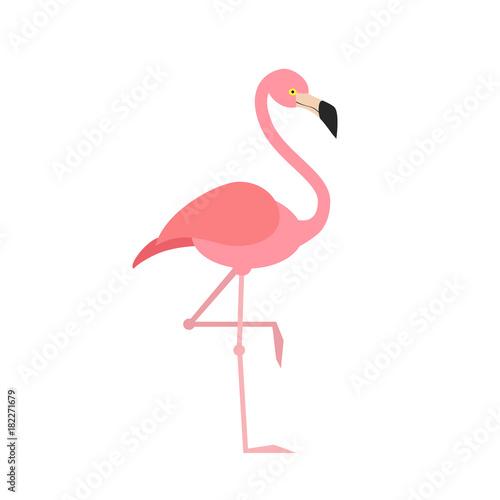 Pink flamingo isolated on white background. Bird. Vector stock.