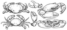 Crab Set Drawing On White Background, Hand Drawn Outline Seafood Vector Illustration, Set Of Crab, Menu, Design, Restaurant