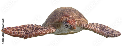 Poster Tortue Green sea turtle isolated on white background
