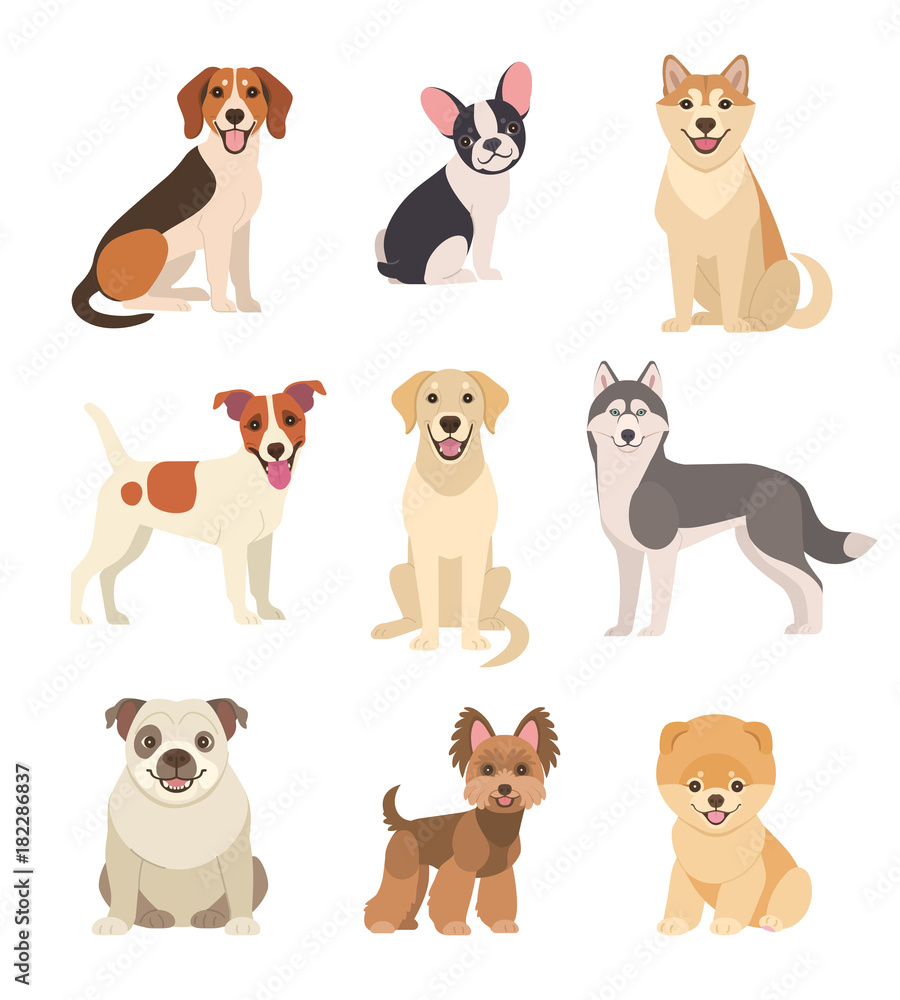 Fototapety, obrazy: Dogs collection. Vector illustration of funny cartoon different breeds dogs in trendy flat style. Isolated on white.