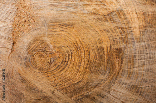 Fotografering  Wood texture background, wooden bark close up