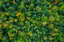 Aerial View Of Autumn Trees. Colorful Trees From Above.