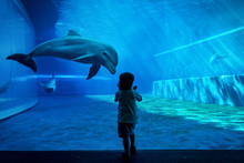 Boy Watching Dolphins