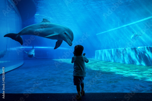 Photographie Boy watching dolphins