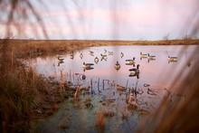 Decoy Water Birds Deployed On ...