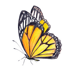 beautiful orange butterfly, isolated  on a white
