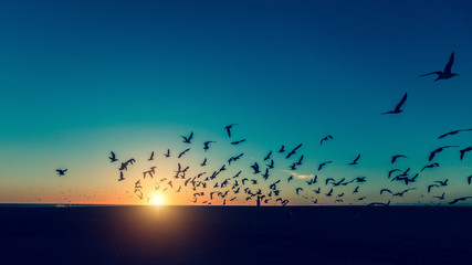 Silhouettes of seagulls flocks on the sea beach at amazing sunset.