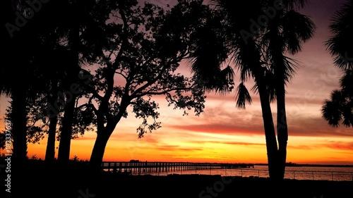 Foto op Aluminium Koraal Orange and pink sunset with Tree silhouette