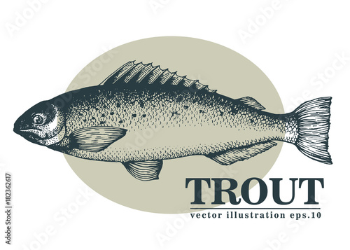 Hand drawn sketch seafood vector vintage illustration of trout fish Fototapeta