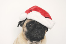 Pug In Christmas Hat - A Postcard Template