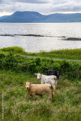 Photo Bantry Bay,, Wild Atlantic Way , Ireland