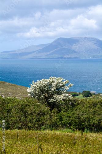 Bantry Bay,Wild Atlantic Way, Ireland Wallpaper Mural