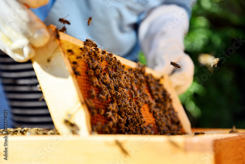 Photo Beekeeper holds a honey cells with bees in his hands.