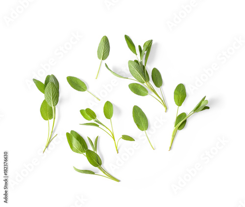 Poster Condiments Sage leaves isolated on white background