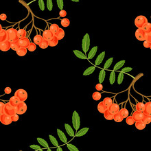 Seamless Pattern With Rowan Be...