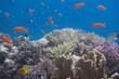buntes Korallenriff mit Fischen