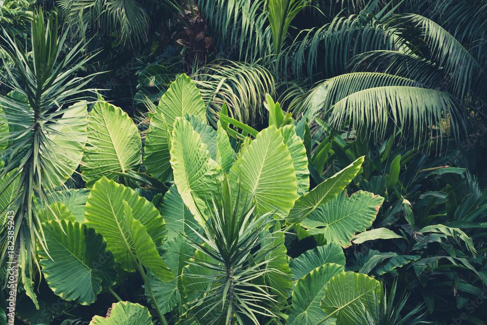 Fototapeta palm trees, jungle  - tropical plants background