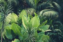 Palm Trees, Jungle  - Tropical...
