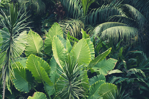 Fotobehang Planten palm trees, jungle - tropical plants background