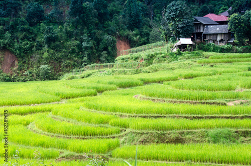 In de dag Rijstvelden Ladder Rice Fields at Mae Hong Son Thailand