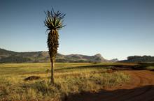 Id Veldt Landscape Mlilwane, S...