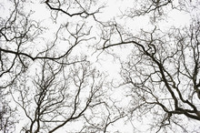 Bare Trees In The Winter Seaso...