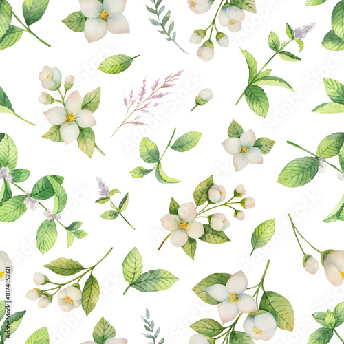 akwarela-wektor-wzor-kwiaty-i-galezie-jasmin-na-bialym-tle-na-bialym-tle