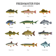 Freshwater Fish Set. Vector Il...